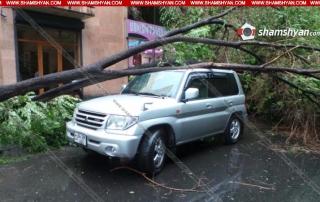 Արտակարգ իրավիճակ Երևանում. հաստաբուն ծառերը տապալել և վնասել են ավտոմեքենաները. ով է փոխհատուցելու, տերերը, չգիտեն