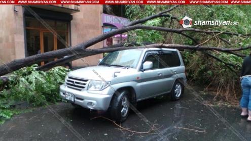 Արտակարգ իրավիճակ Երևանում. հաստաբուն ծառերը տապալել և վնասել են ավտոմեքենաները. ով է փոխհատուցելու, տերերը, չգիտեն...